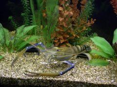 Моллюски и ракообразные