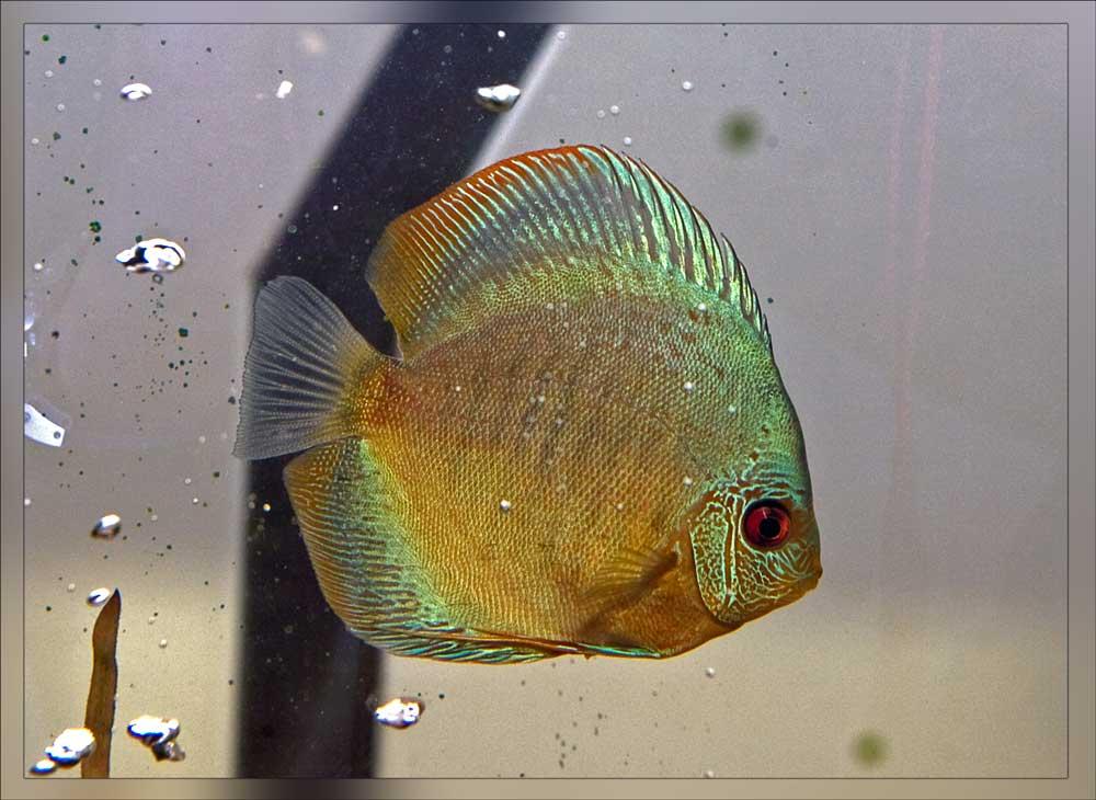 Священные рыбы Инков