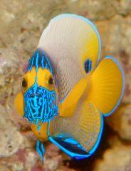 Морские Рыбы и Беспозвоночные
