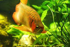 Портрет любимой рыбы