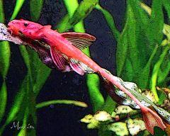 Красная ринелорикария